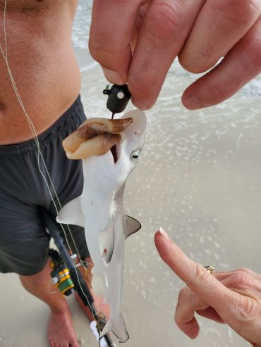 Tiny shark - Ft. Myer's Beach.